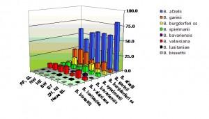 Genospecies Verteilung